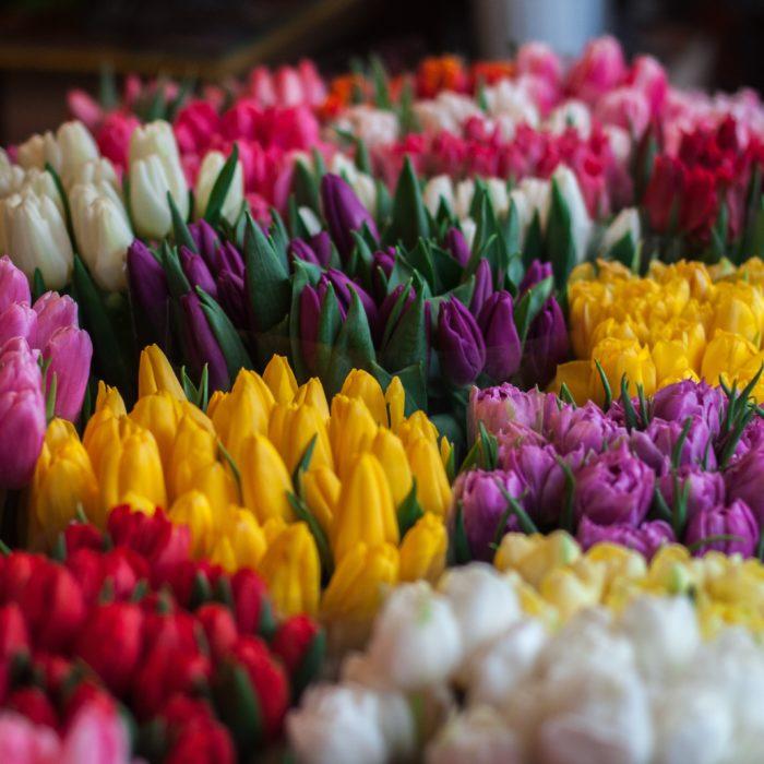 Spring Flower Tips!