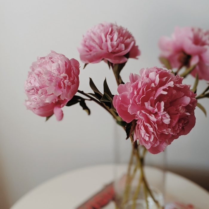 The Blooming Story of Peonies